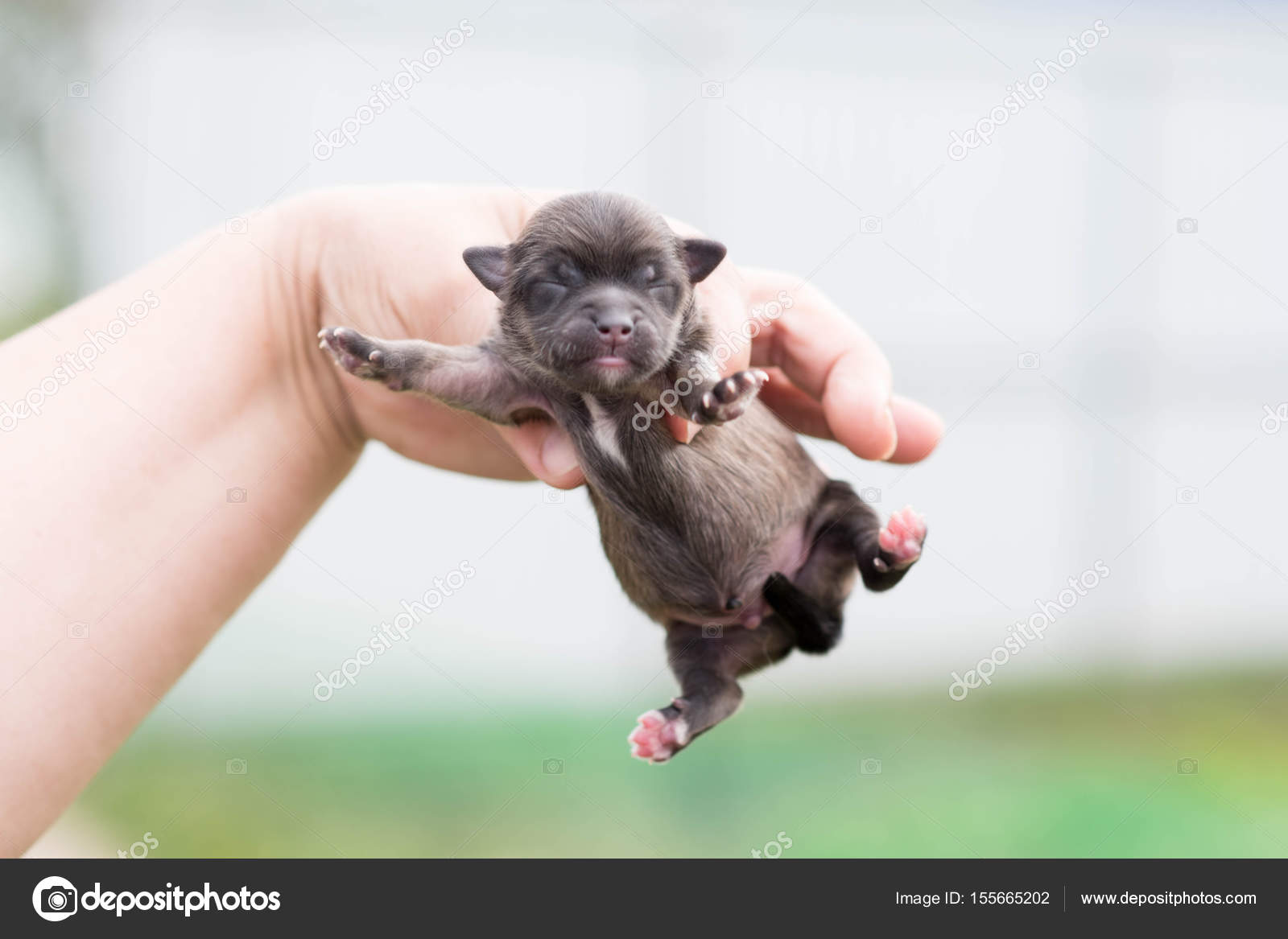 Pictures Really Cute Puppies Very Cute Black Puppies Beautiful Puppies Stock Photo C Elinkac 155665202