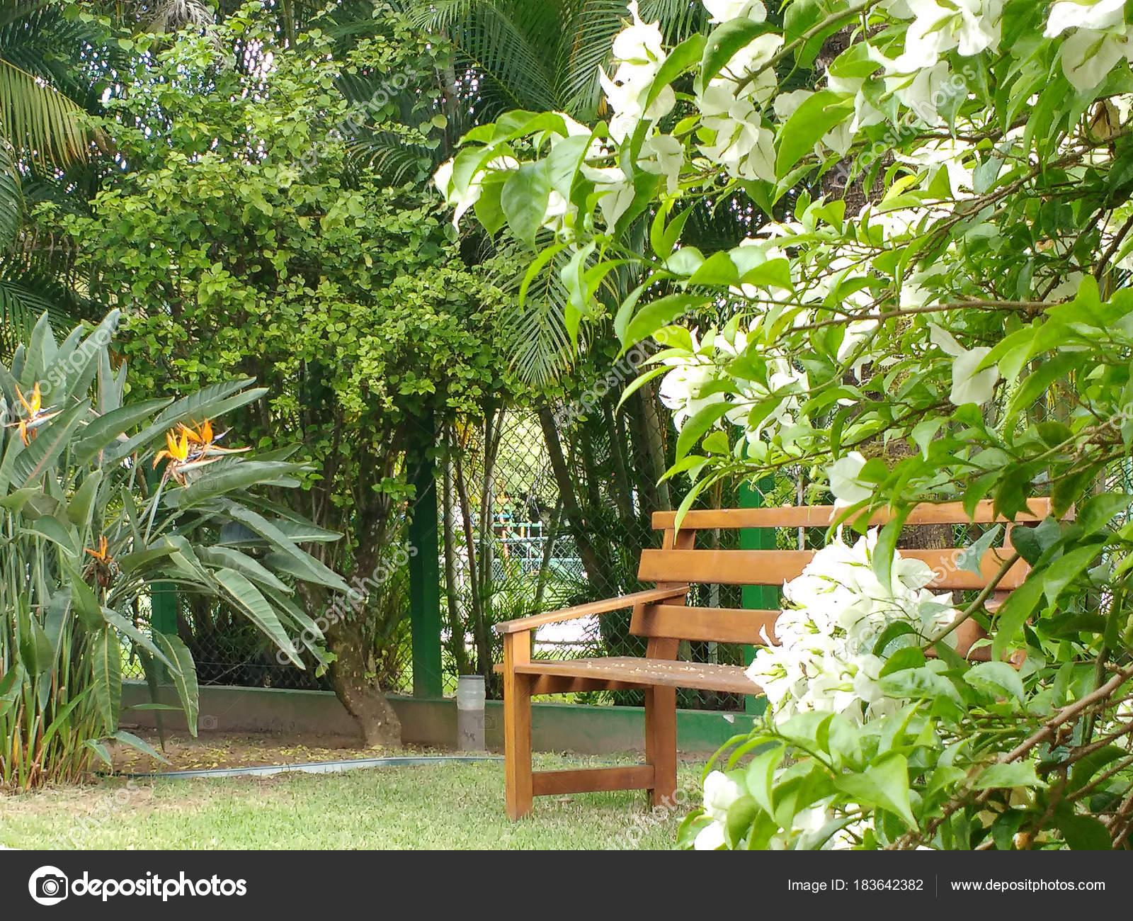 Banc Bois Ombre Fond Jardin Entourée Fleurs Vert Forêt Journée ...
