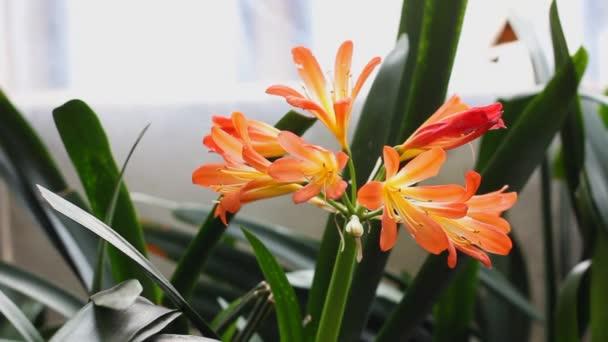 Orange flowers in a pot