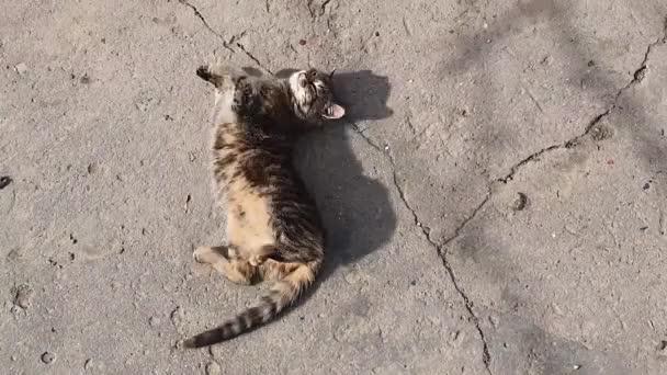 Roztomilé venkovské koťátko ležící venku na betonové konstrukci, topící se na teplém jarním slunci. Rozkošná, potěšená pruhovaná kočka převalující se vzhůru nohama mytí, lízání a čištění srsti.