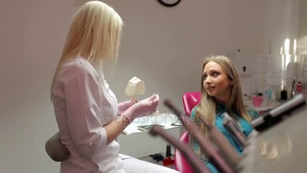 Female dentist talking to patient, showing dental jaw model in dental office.