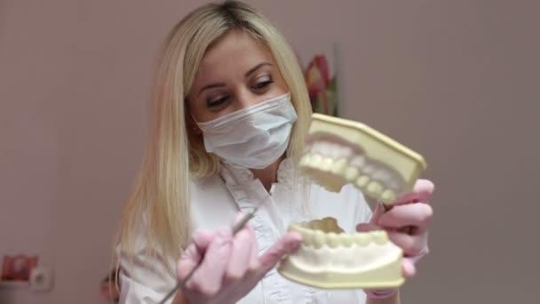 Zubař žena s modelem zuby. Zubní zdravotní péče kliniky