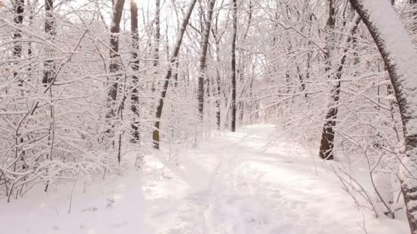 Krásný výhled ze slunné zasněženém lese.