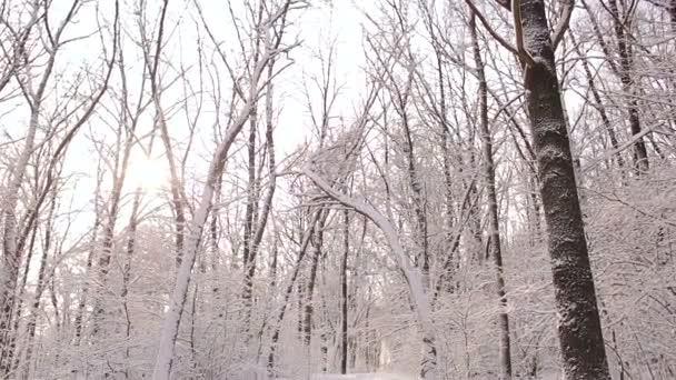 Krásný výhled na zasněžené stromy v lese.