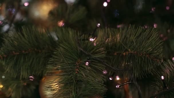 Close-up of Christmas tree with colorful lights.