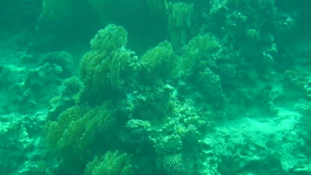 Coral reef with exotic fishes, slow motion.