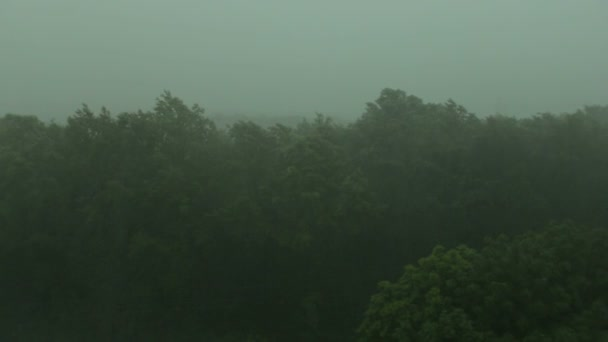 Silný déšť a vítr třese stromy. Hurikán