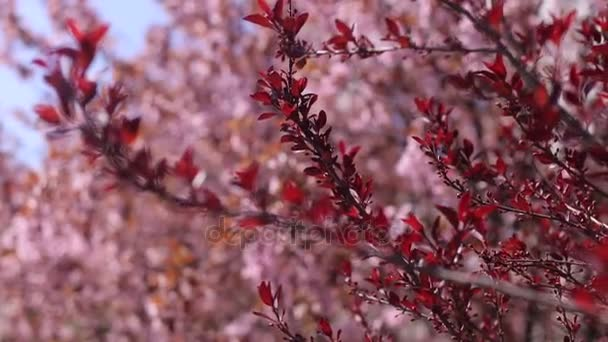 Beautiful branch with red leaves of flowering tree