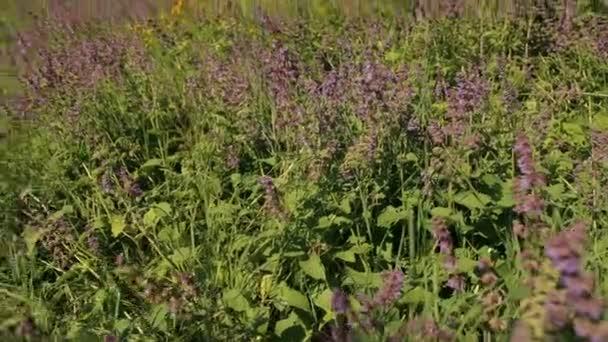 Pole s divokou trávou a fialové květy.