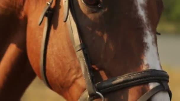 Obličej a oči detail koně v podzimní pozadí.