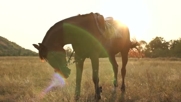 Beautiful brown horse on field at the setting sun.