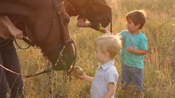 Kinder füttern Pferde mit Äpfeln auf dem Feld, Zeitlupe.