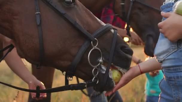 Matka a syn krmit koně jablka a chléb