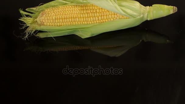Detail z lusků zralé sladké kukuřice na černém.