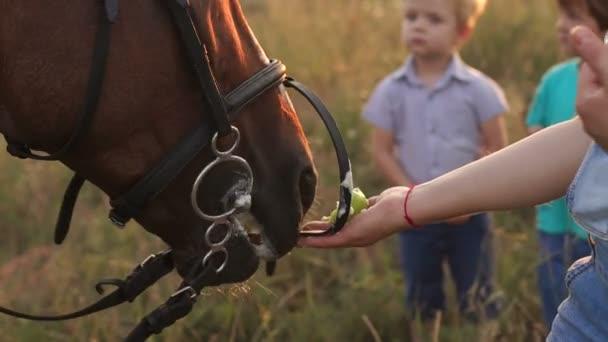 Closeup z velké rodiny krmení koně jablka