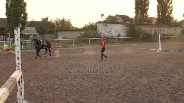 Girl is teaching a horse to run around in a circle