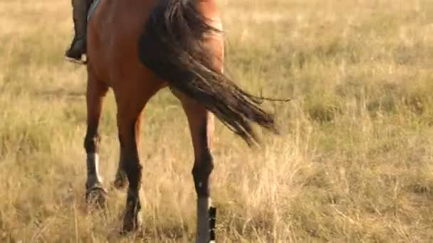 Egy gyönyörű barna ló a nap részlete.