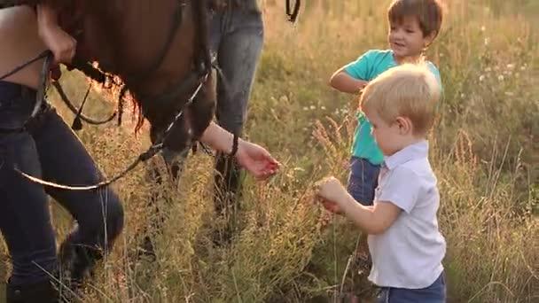 Kleine Kinder füttern die Pferde mit Äpfeln auf dem Feld