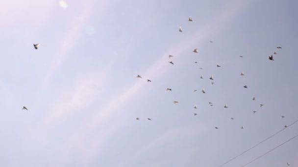 Hejno holubů, letící na obloze