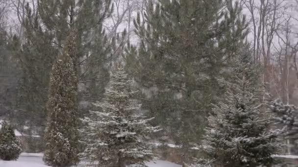 neve pesante che cade in una foresta nel periodo invernale