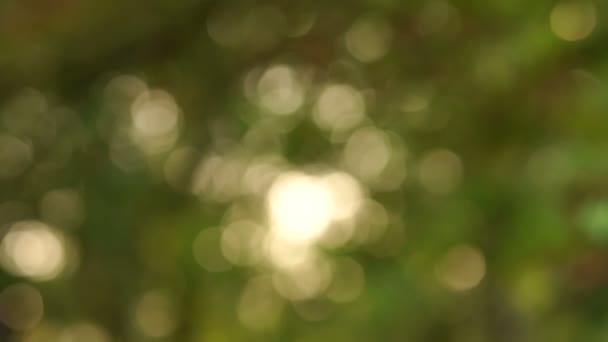 Rozmazaný obraz. Krásné zelené přírody pozadí