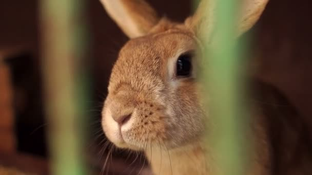 Rabbit close-up in a cage at animal farm.