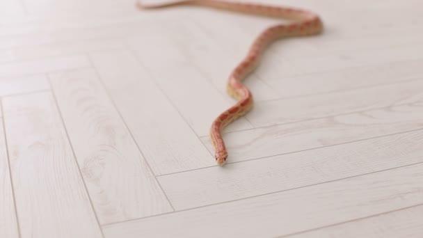Close-up of snake on white background.
