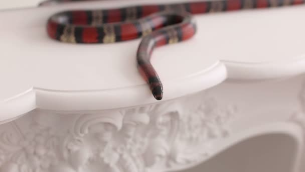 Close-up of a colorful snake on a white table.
