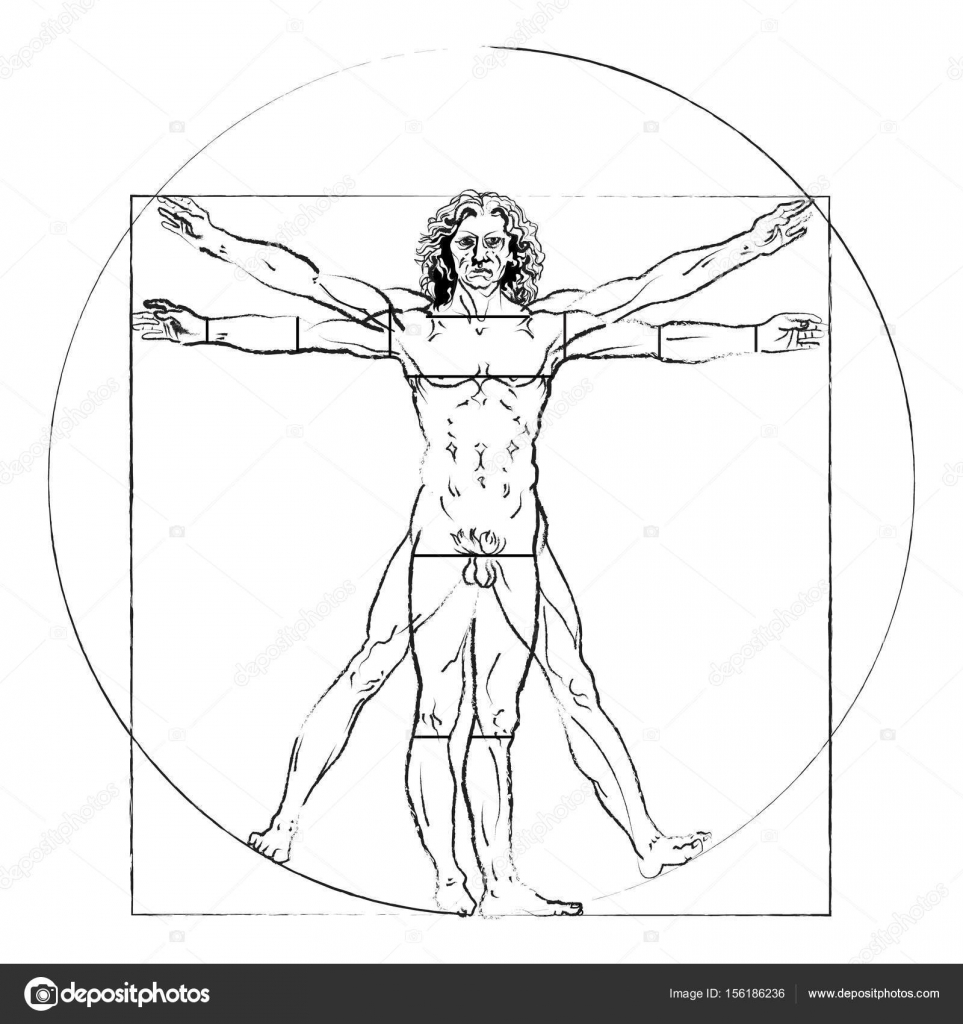 The Vitruvian Man Leonardo Da Vinci S Drawing On White Human