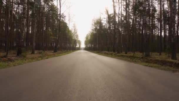 procházka po asfaltové cestě v jarním lese