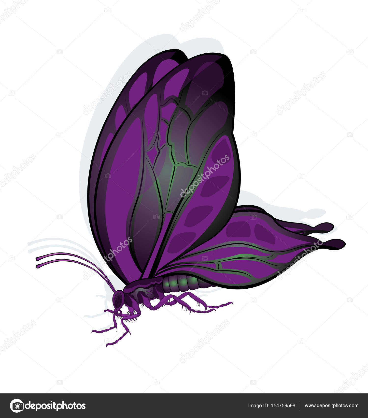 butterfly in the sitting position ⬇ vector image by © lyujenbofi | vector  stock 154759598  depositphotos