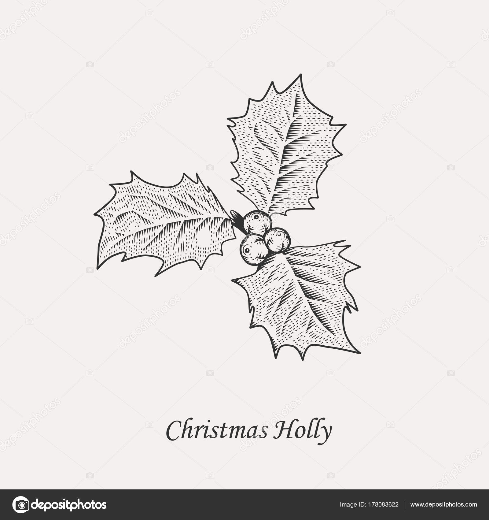 Acebo de Navidad las hojas y las bayas — Archivo Imágenes ...