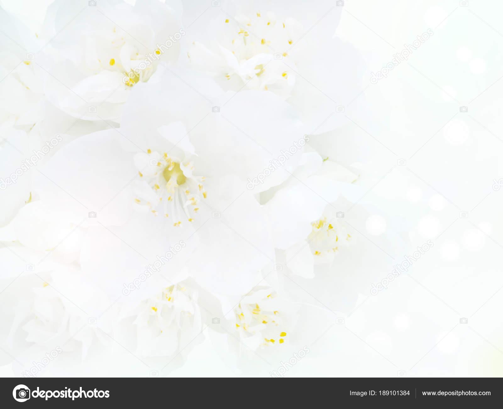 White english dogwood flowers bouquet background — Stock Photo ...