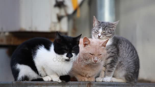 three cats sitting on street