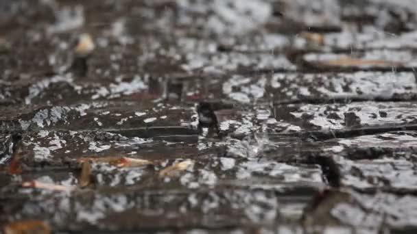 water dripping on stone-block pavement — Stock Video © Rufootage ...