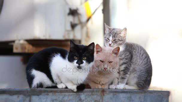 three cats sitting on street