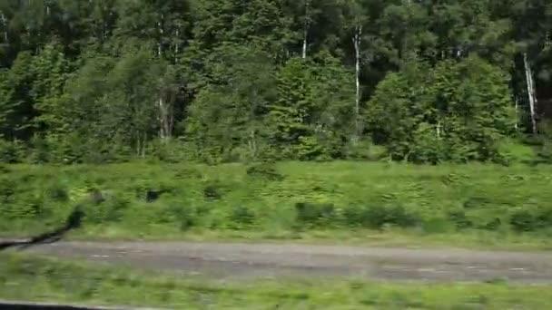 krásný zelený Les