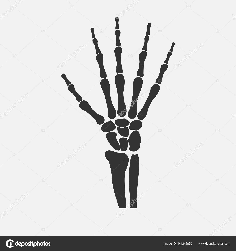 los huesos de las manos de la muñeca — Vector de stock ...