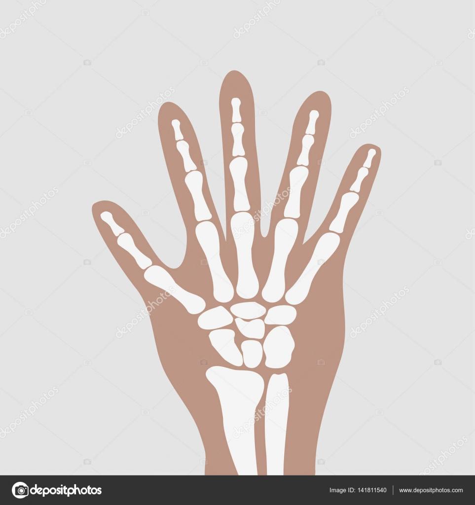 Wrist Hands Bones Stock Vector Oleksandrmalysh 141811540