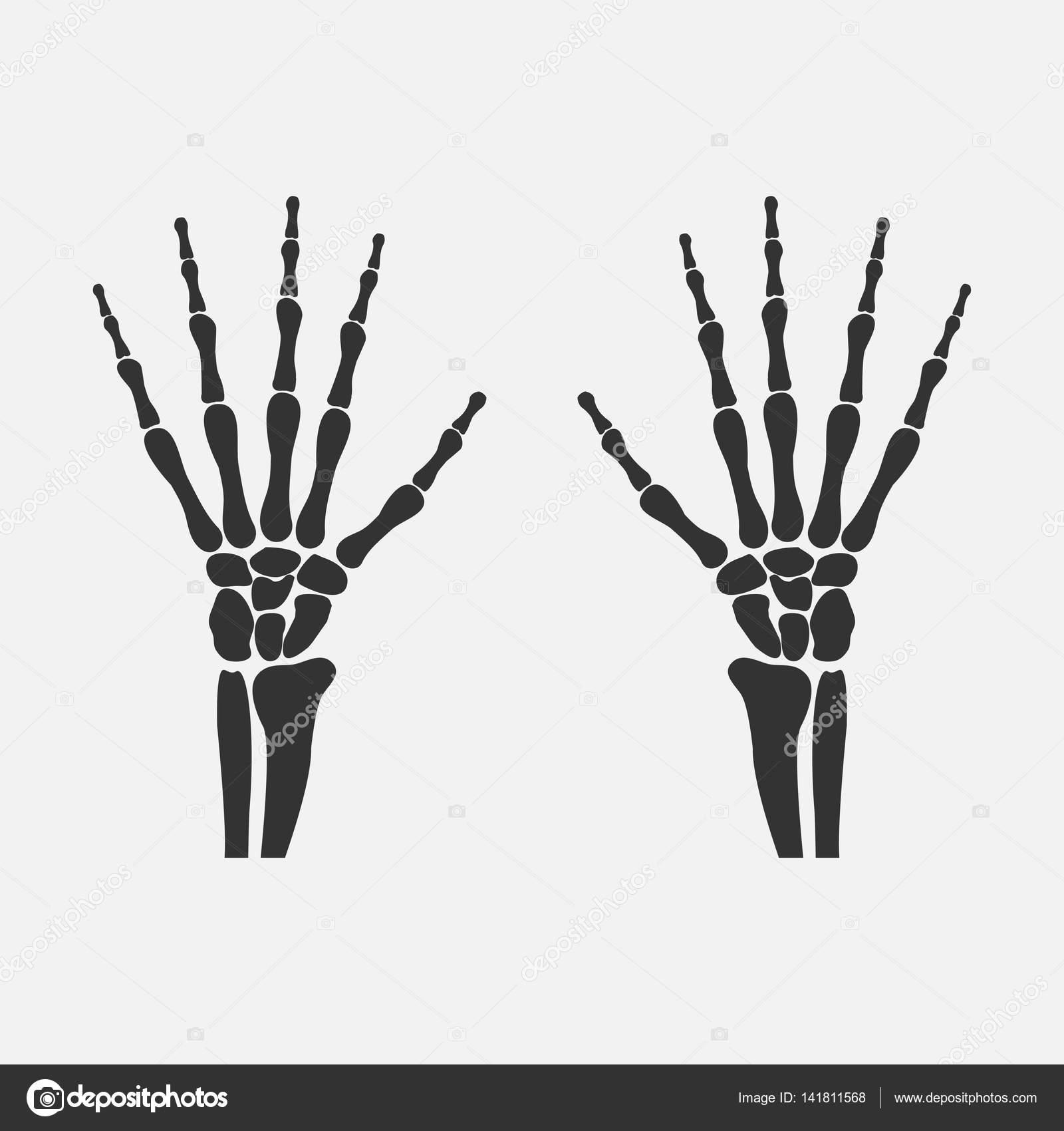 die Hände Handgelenk Knochen — Stockvektor © OleksandrMalysh #141811568