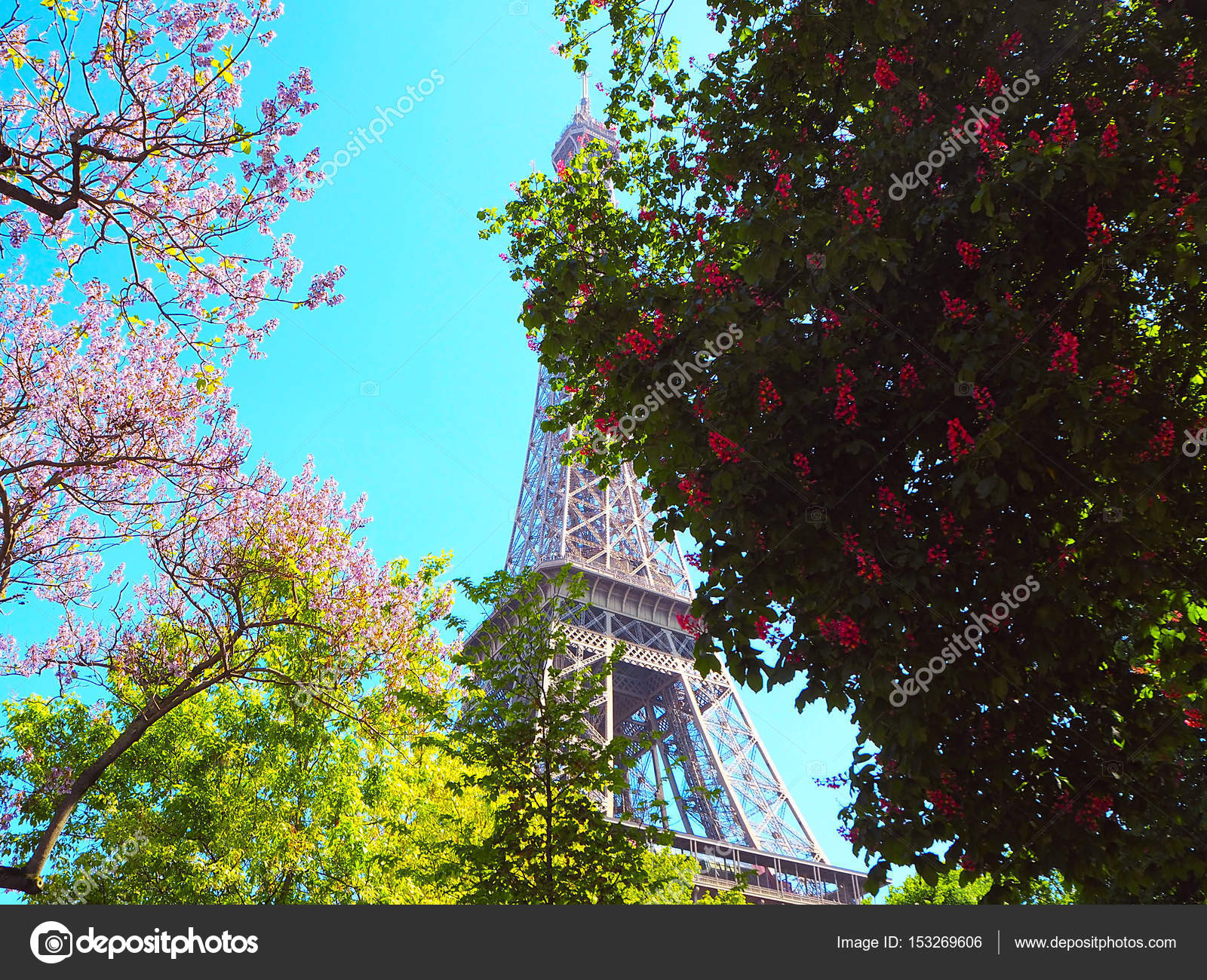 Blossoming pink chestnut tree magnolias pink flowering bushes and blossoming pink chestnut tree magnolias pink flowering bushes and eiffel tower on background spring in paris photo by elens196 mightylinksfo