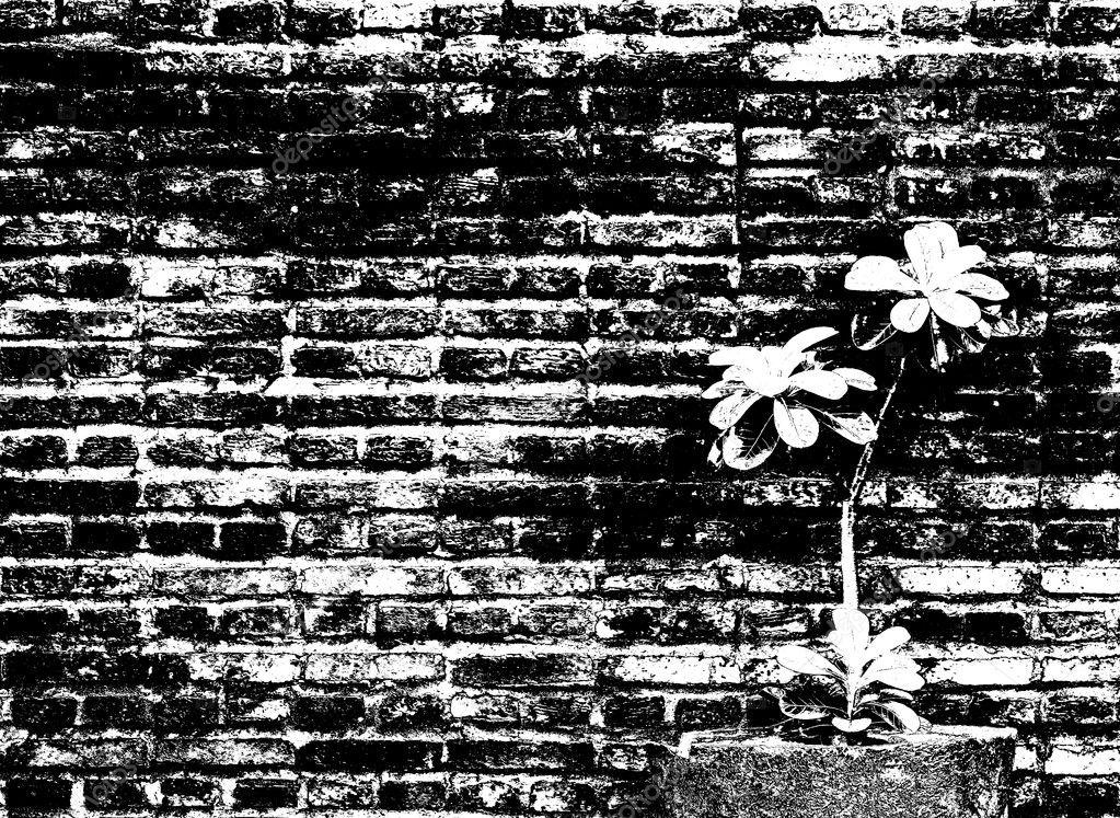 Mauer mit kleinen Blumentopf, Bild in schwarz-weiß Effekt dekorieren ...