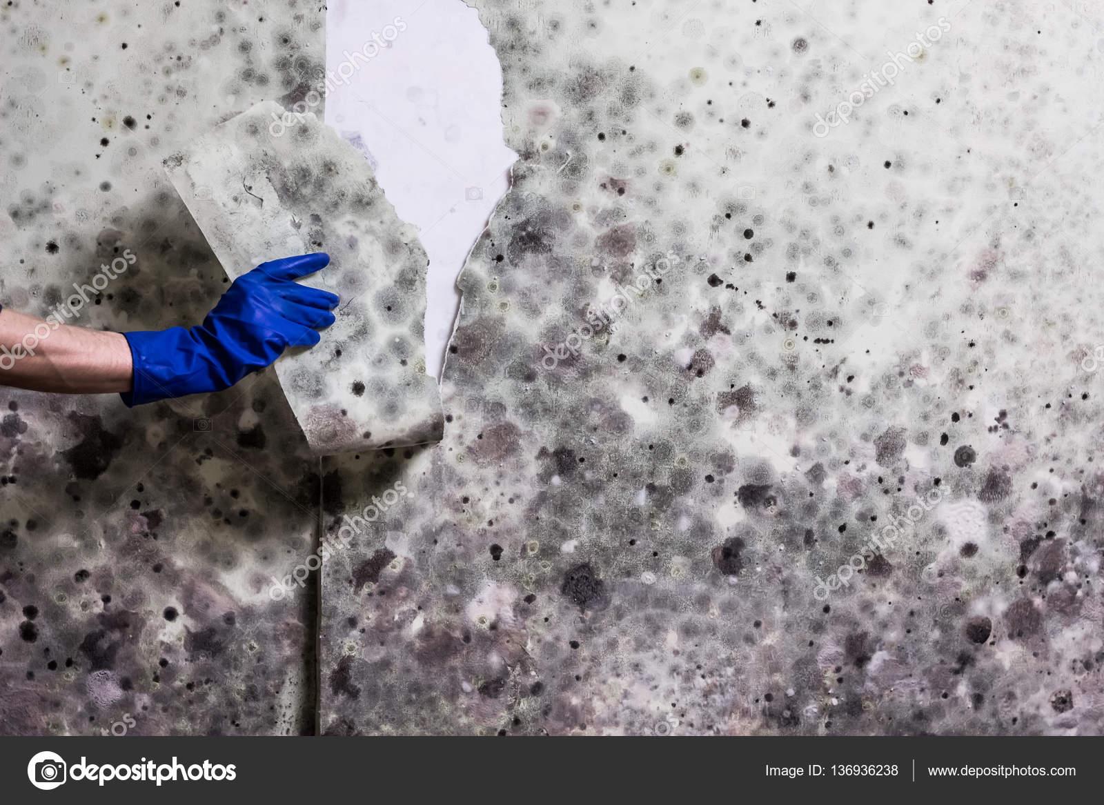Schimmel Verwijderen Muur : Verwijderen van schimmel uit de muur in het huis u stockfoto
