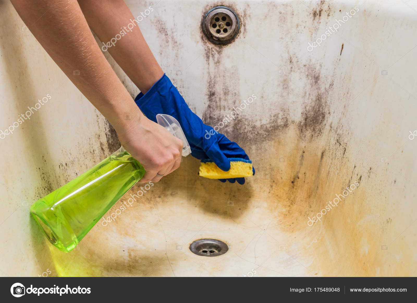 Cleaning Dirty Old Bathtub With Corrosion And Mould With Detersiveu2013 Stock  Image