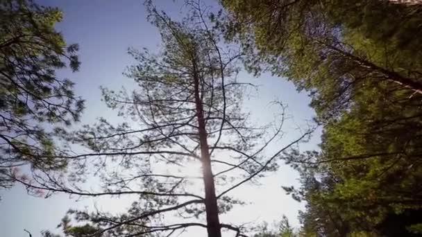 őszi fa, fa, v, széles szög