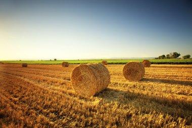 Hay Bales on Farm