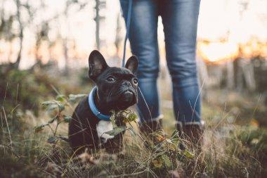 bulldog puppy sitting in forest grass