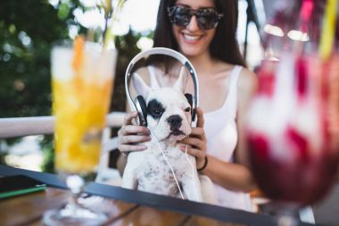 Cute white french bulldog puppy enjoying in owner's lap and listening to music