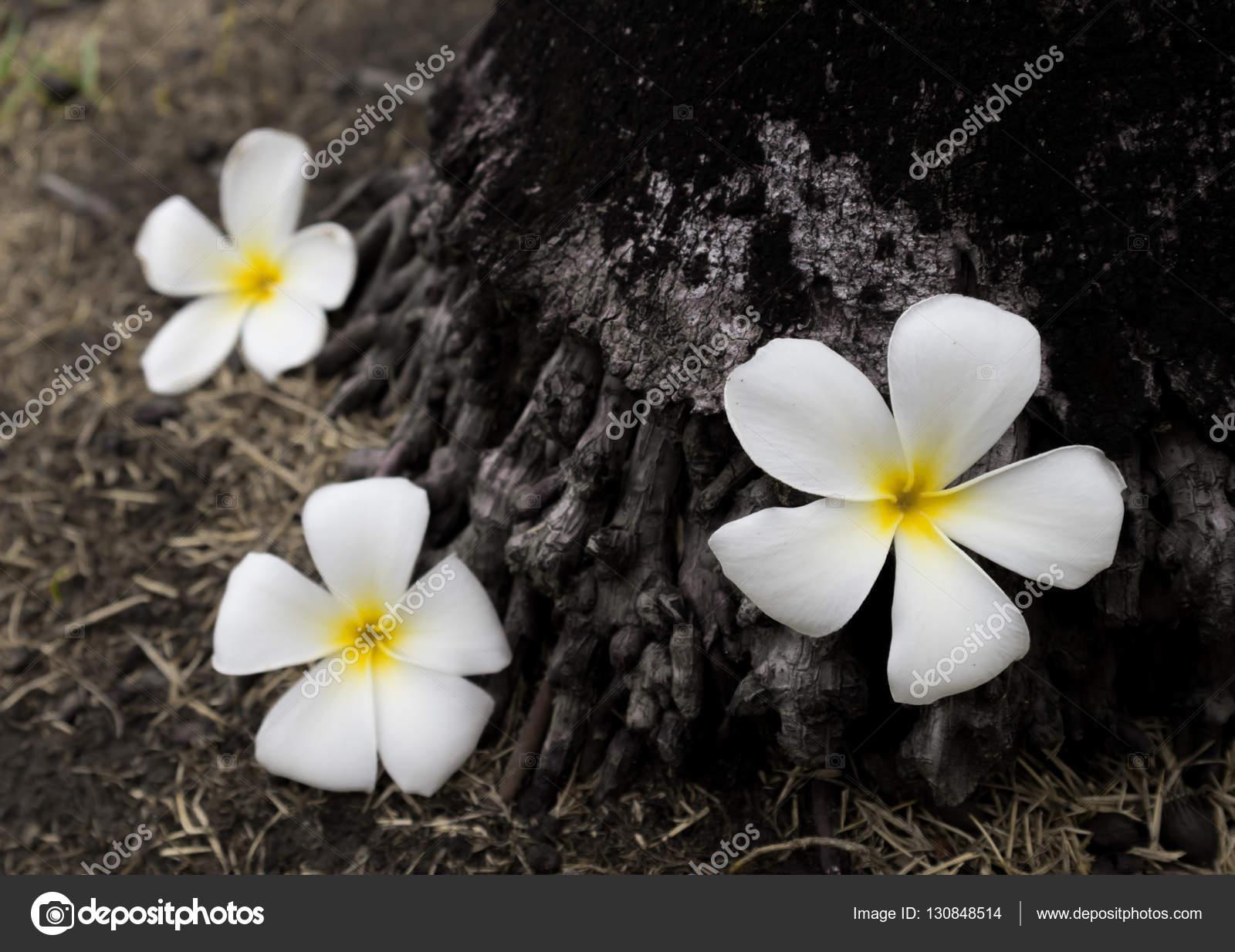Flor triste