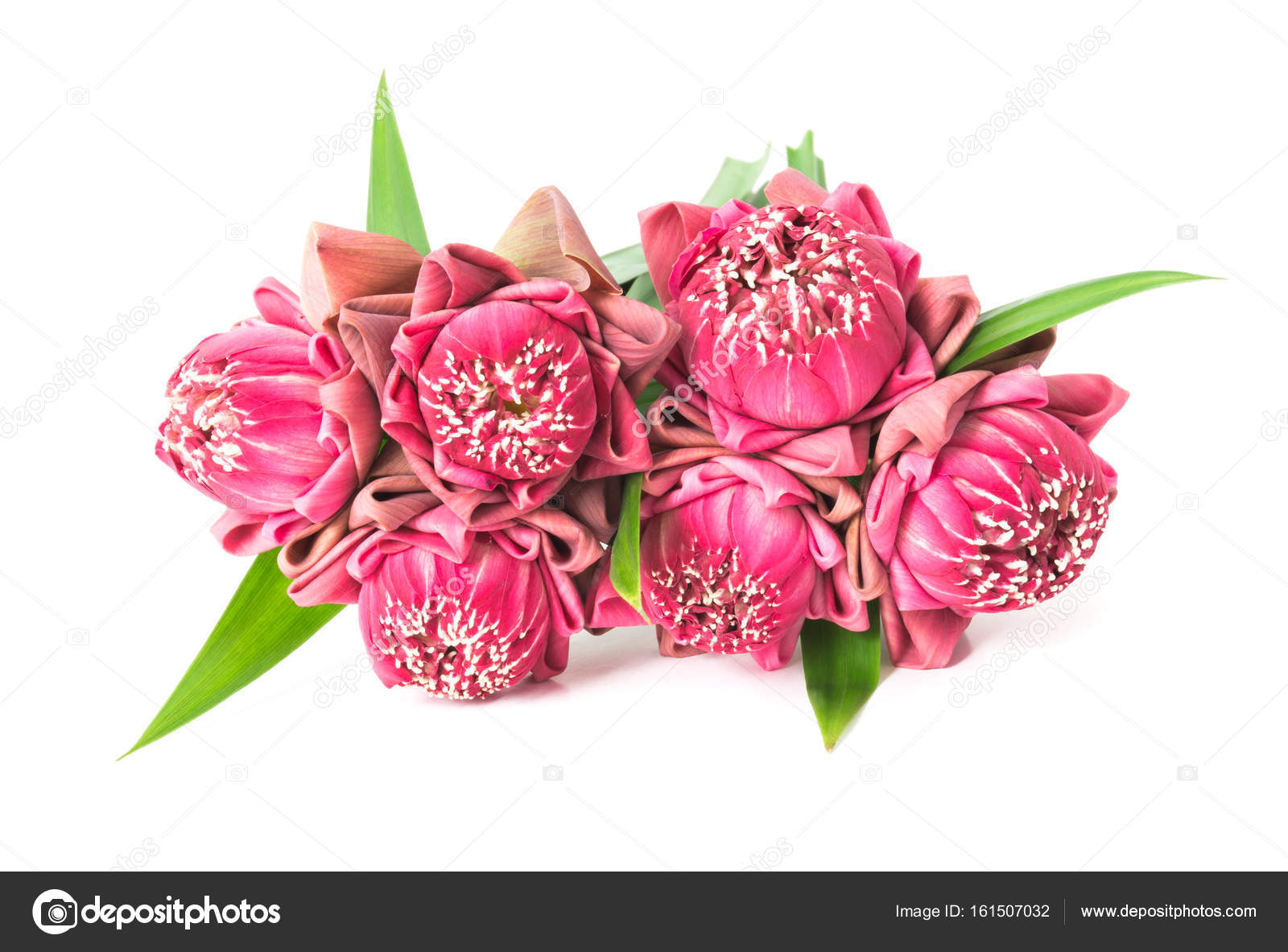 Buddhist pink Lotus Flower offerings to gods, selective focus– stock image